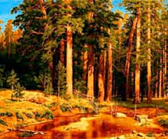 Участки у леса